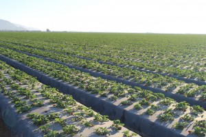 Sandhu 2014 Farming BC