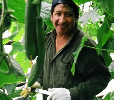Temporary Foreign Worker Program, Agriculture Stream Fact Sheet: 10 Myths vs Reality