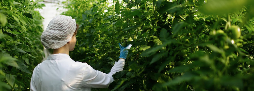 Woman in labcoat inspecting plants.