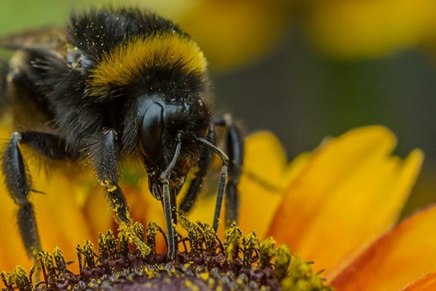 New publications encourage Canadian honey bee health