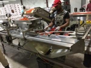 Grange d'emballage de Magalas' produce