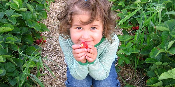 Little girl holding strawberry in a field
