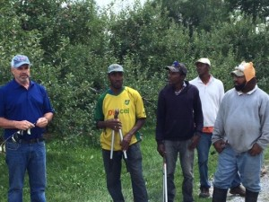 Murray Porteous, de Lingwood Farms, travaille dans son verger de pommiers avec ses employés saisonniers. Photos : Janet Krayden (CAHRC)