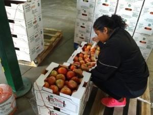 Des tomates dans la grange d'emballage de Chary