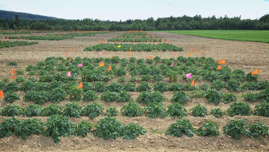 champs de cultivation avec drapeaux
