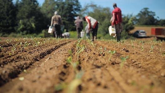 Célébrons les travailleurs agricoles internationaux!
