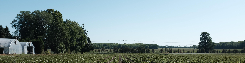 Crop panaorama