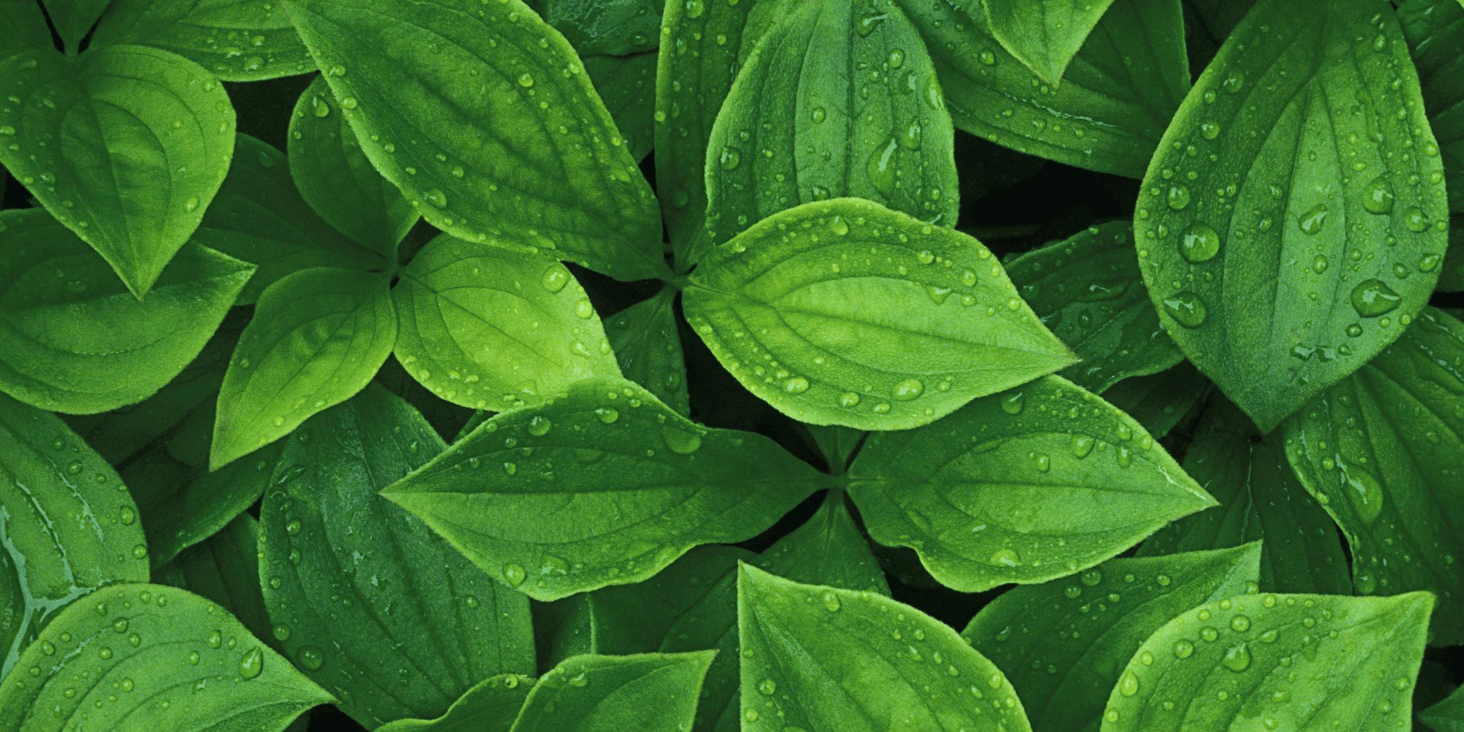 plants-nappo